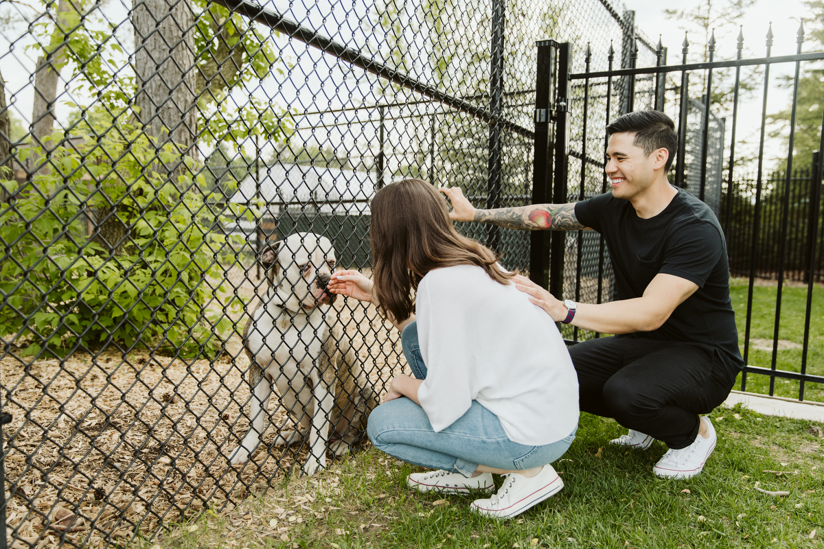 dog tales rescue in king ontario
