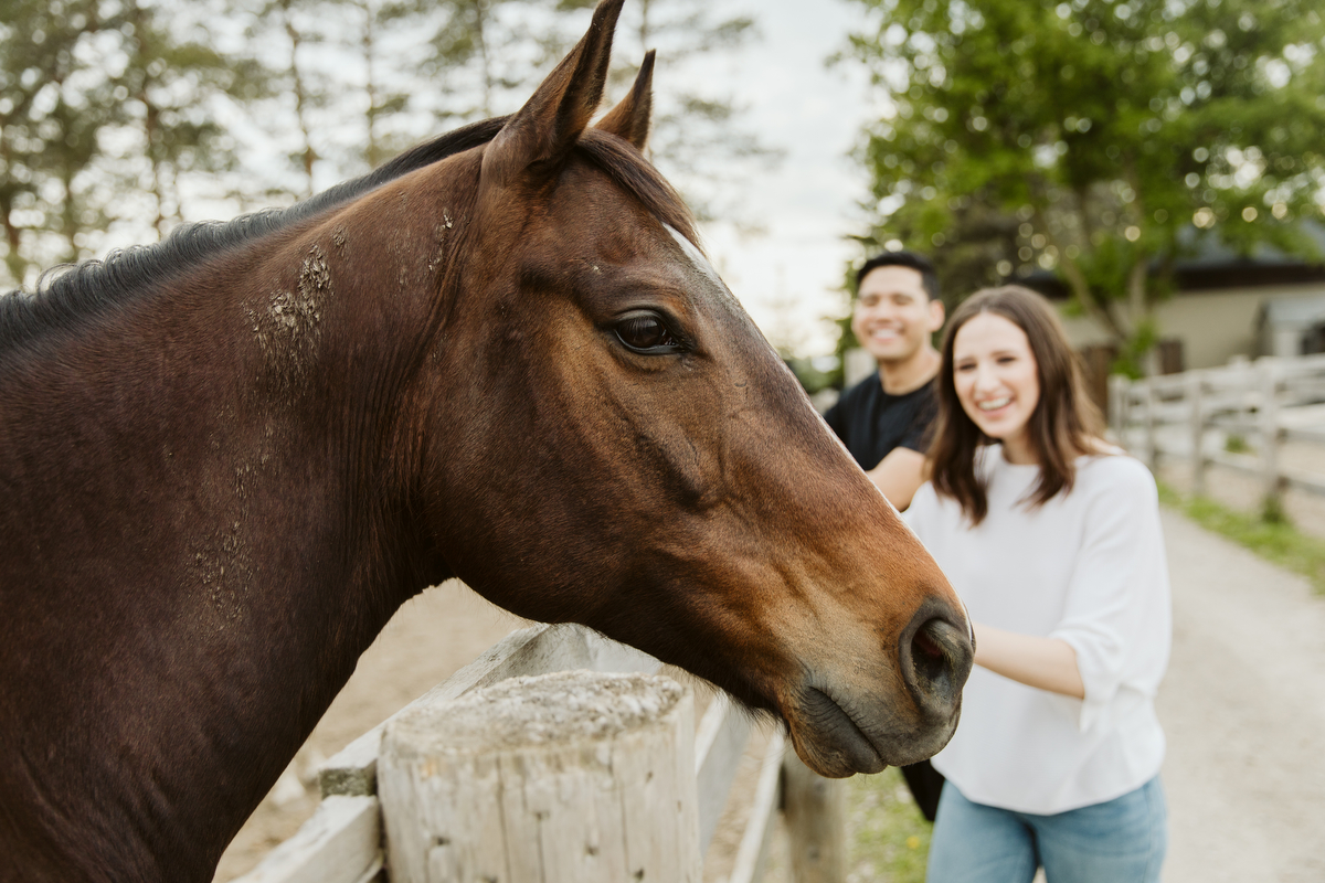 engagement photography with horses toronto